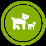 Trächtigkeit-hunde