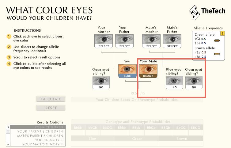 baby augenfarben rechner augenfarbe baby berechnen. Black Bedroom Furniture Sets. Home Design Ideas